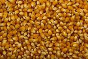 Некондиция,  отходы масличных и зерновых.